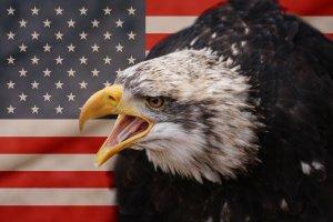 flag+eagle